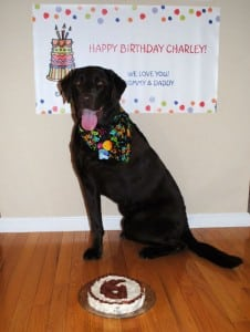 Bone cancer hero Charley