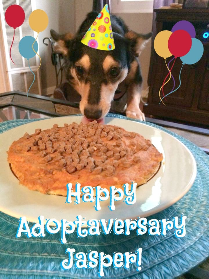 Easy and healthy dog cake recipes