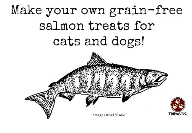 grain free, salmon, treats, recipe, dogs, cats