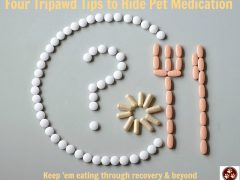 Tripawd, dog, cat, hide, pet, medication, pills, surgery, recovery, appetite
