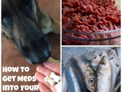 meatballs recipes for dogs and cats