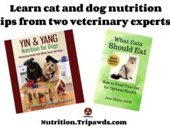 Cat Dog Nutrition Tips