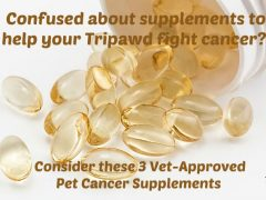pet cancer supplements vets recommend
