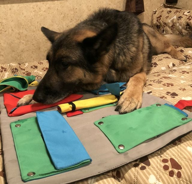 Tripawd Food Puzzle
