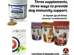 Dog Immunity Support Supplements