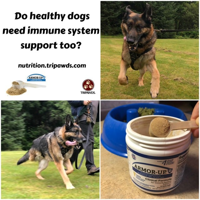 healthy dogs need immune support