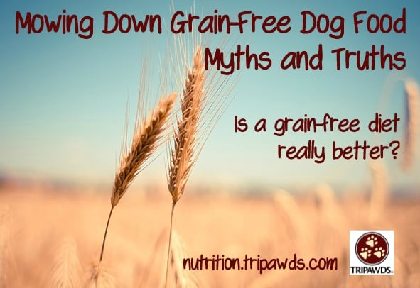 grain-free dog food debate
