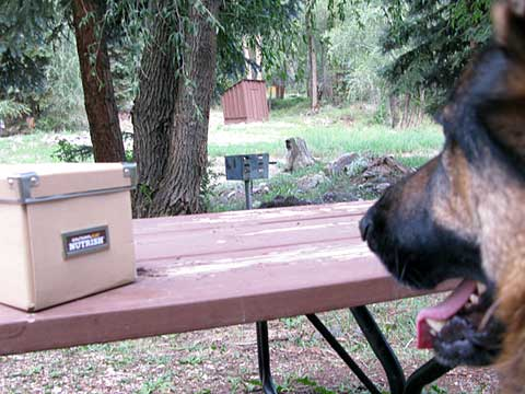 Rachel Ray Nutrish Natural Dog Food Review