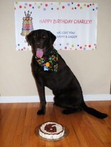 Bone cancer hero Charley