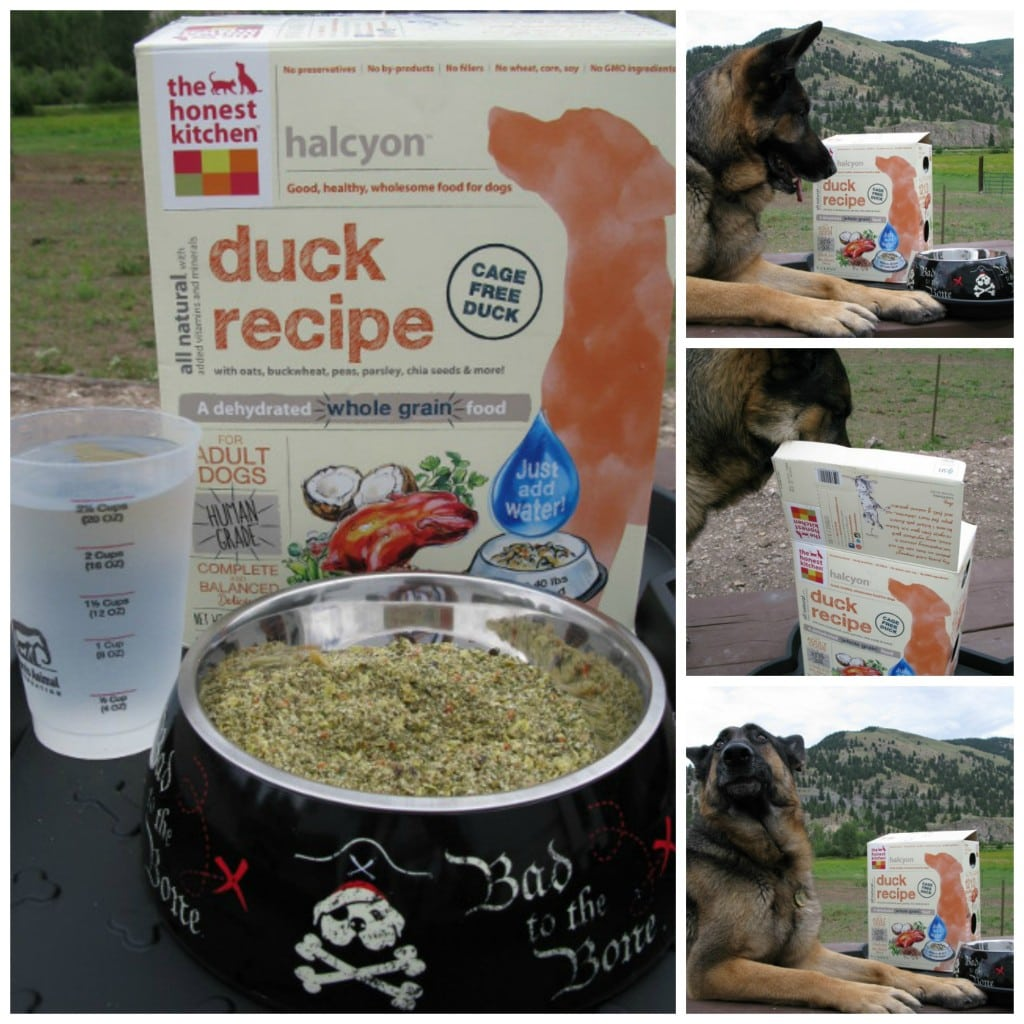 Honest Kitchen duck recipe introduces novel protein dog food