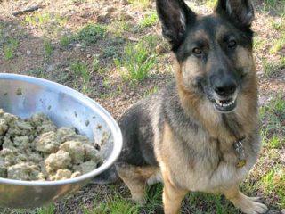 Primal Freeze Dried Nuggets Dog Food