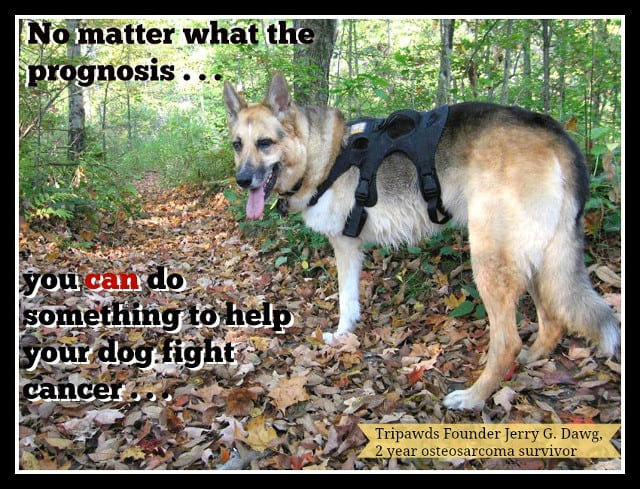K9 Immunity, coupon, dogs, cancer, osteosarcoma, tripawd