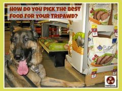 best tripawd nutrition