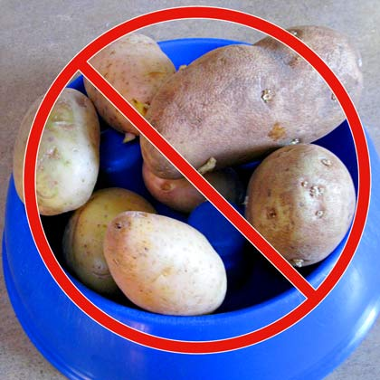 No Potatoes in Dog Food