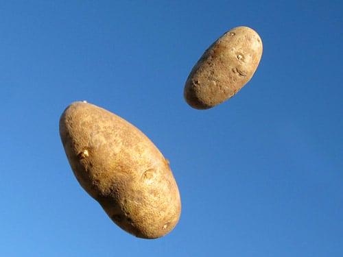 No Potatoes in Dog Food