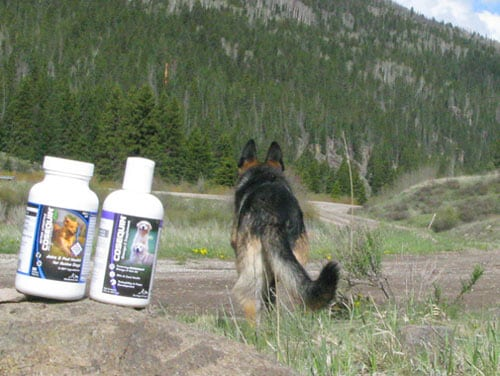 Cosequin Joint Health Supplements help Tripawd GSD Wyatt