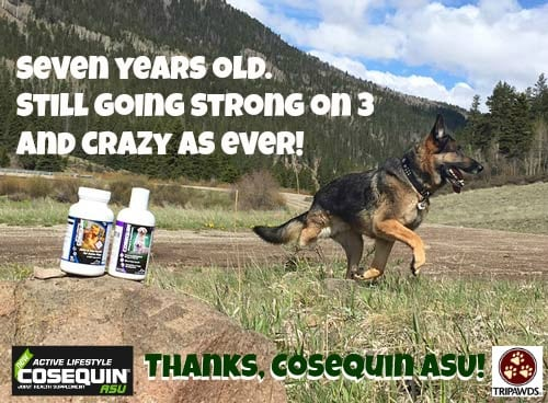tripawd, dog, joint support, cosequin, arthritis, supplement, glucosamine