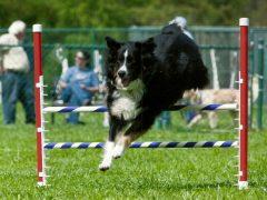 Tripawds holistic vet help
