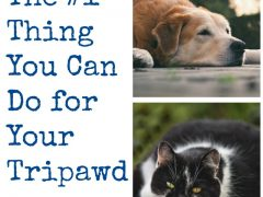 Tripawd lose weight