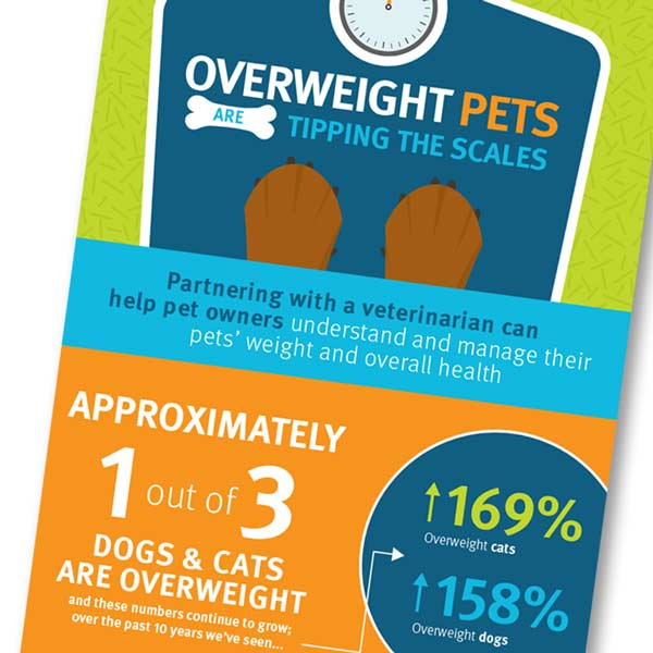 pet obesity report