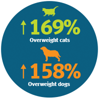 obese pets tips