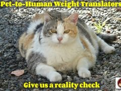 pet-to-human weight translator