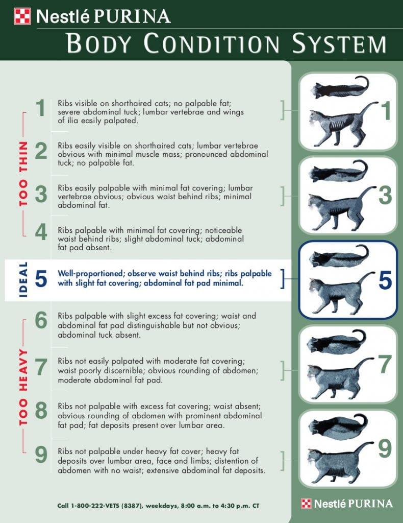 Feline Body Condition Scale