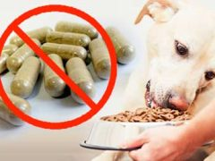 support a dogs immune system