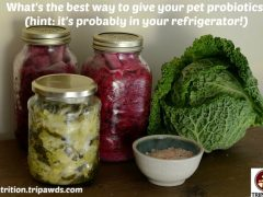 pet food prebiotics probiotics