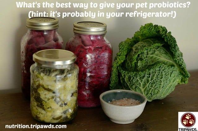 pet food prebiotics probiotics