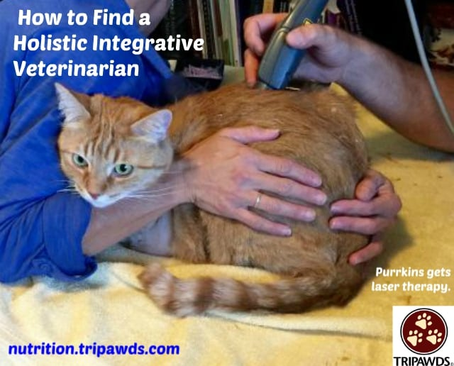Find a Holistic Integrative Veterinarian