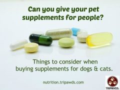 Is it Safe to Give Your Pet People Supplements?