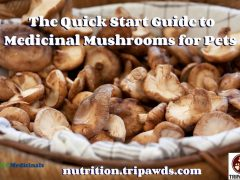 Medicinal Mushrooms for Pets Guide
