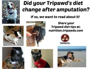 Tripawd Diet Tips