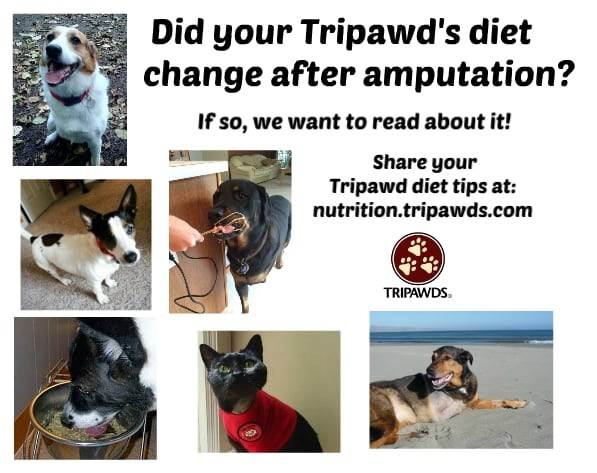 Tripawd Diet Tips