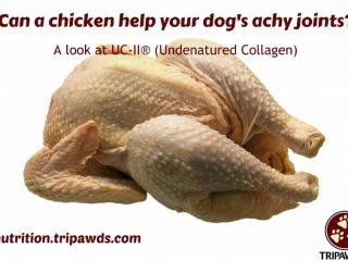 UC-II®helps dogs with arthritis