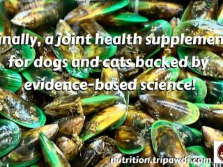 Joint Support for Tripawd Cats and Dogs