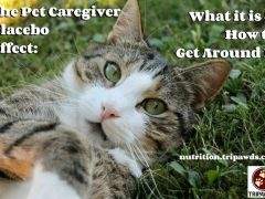 pet caregiver placebo effect