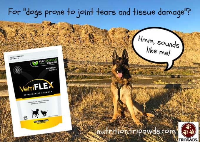 Tripawd joint support supplement