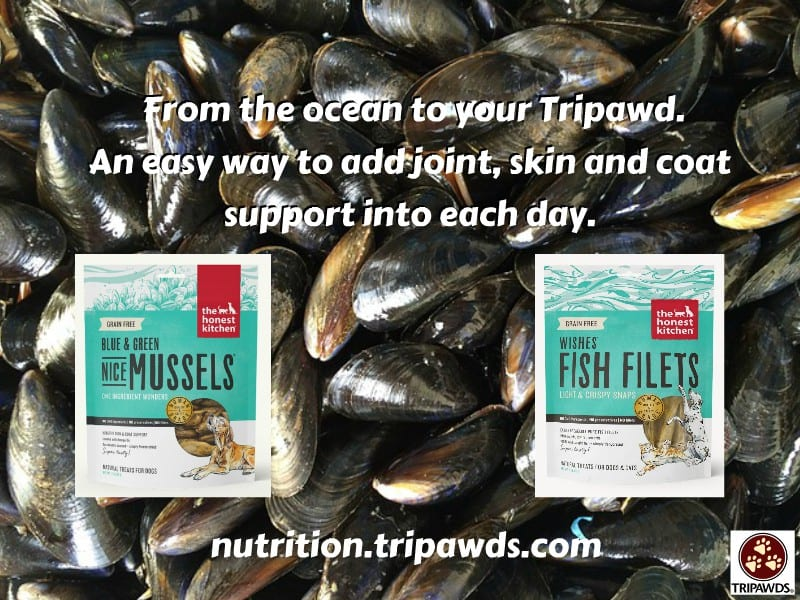 Tripawd have nice mussels