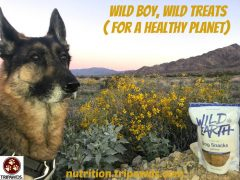 meat-free pet food treat