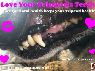 clean Tripawd teeth