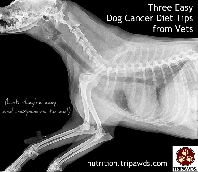 easy dog cancer diet tips