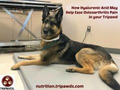 hyaluronic pet supplements