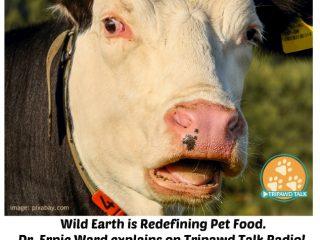 vegan dog food, wild earth