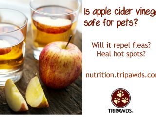 apple cider vinegar pets health problems