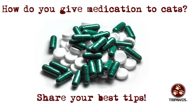 tips to give cats pills