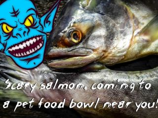 decomposed salmon in pet food