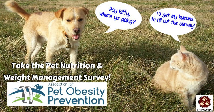 Pet Nutrition and Weight Management Survey!
