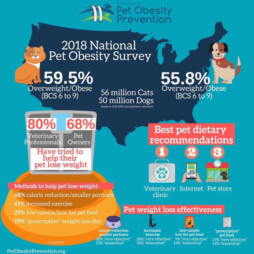 pet obesity survey results